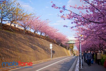 Các gói cước chuyển vùng quốc tế MobiFone đi Nhật được nhiều người quan tâm